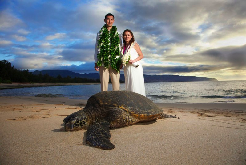 Giant sea turtle blessing the wedding on Papailoa Beach, Oahu --- this is too cool!