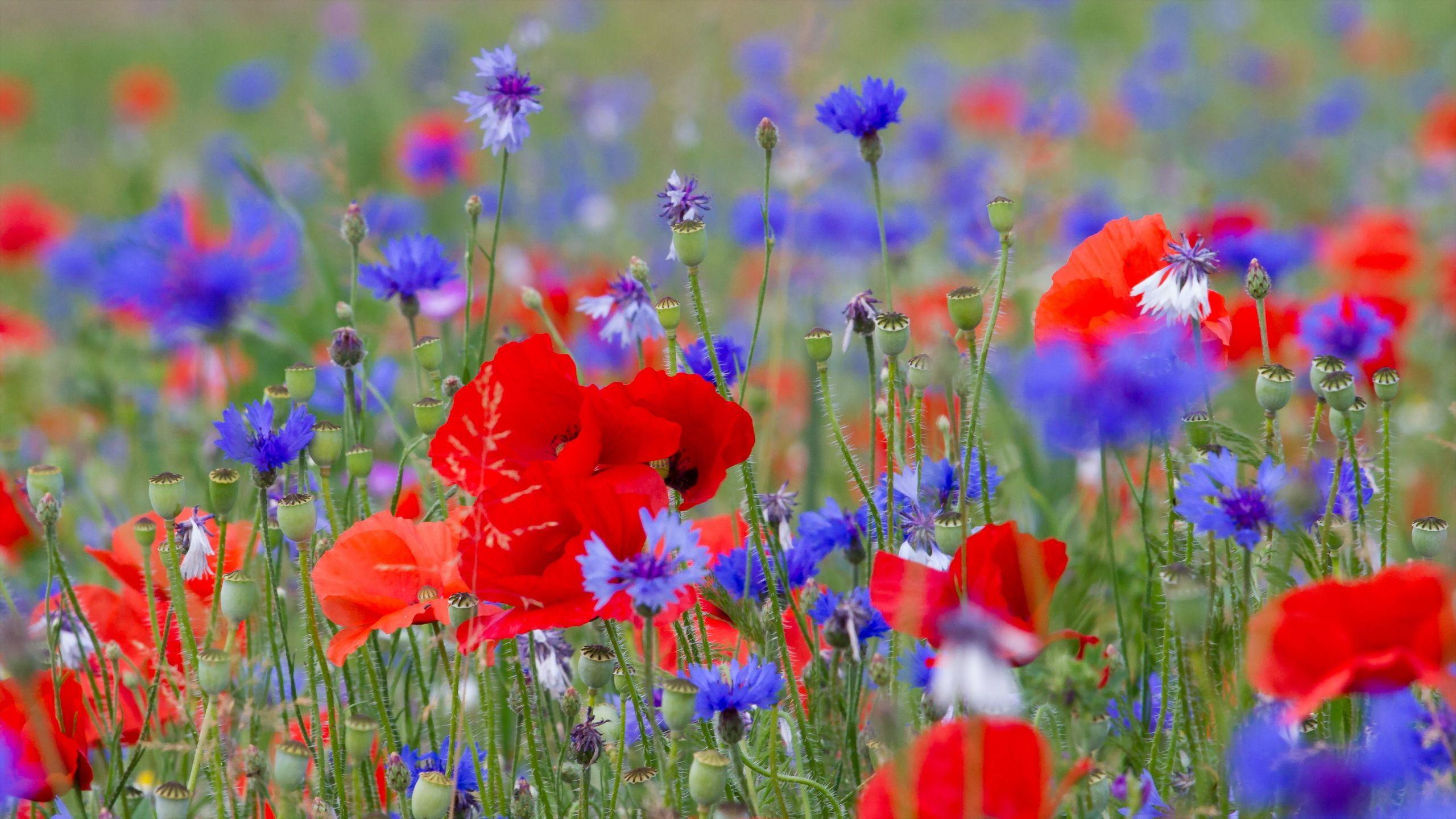 Wild Flowers Desktop Background Wallpapers Hd Free 341130 Flower Wallpaper Flower Landscape Flowers