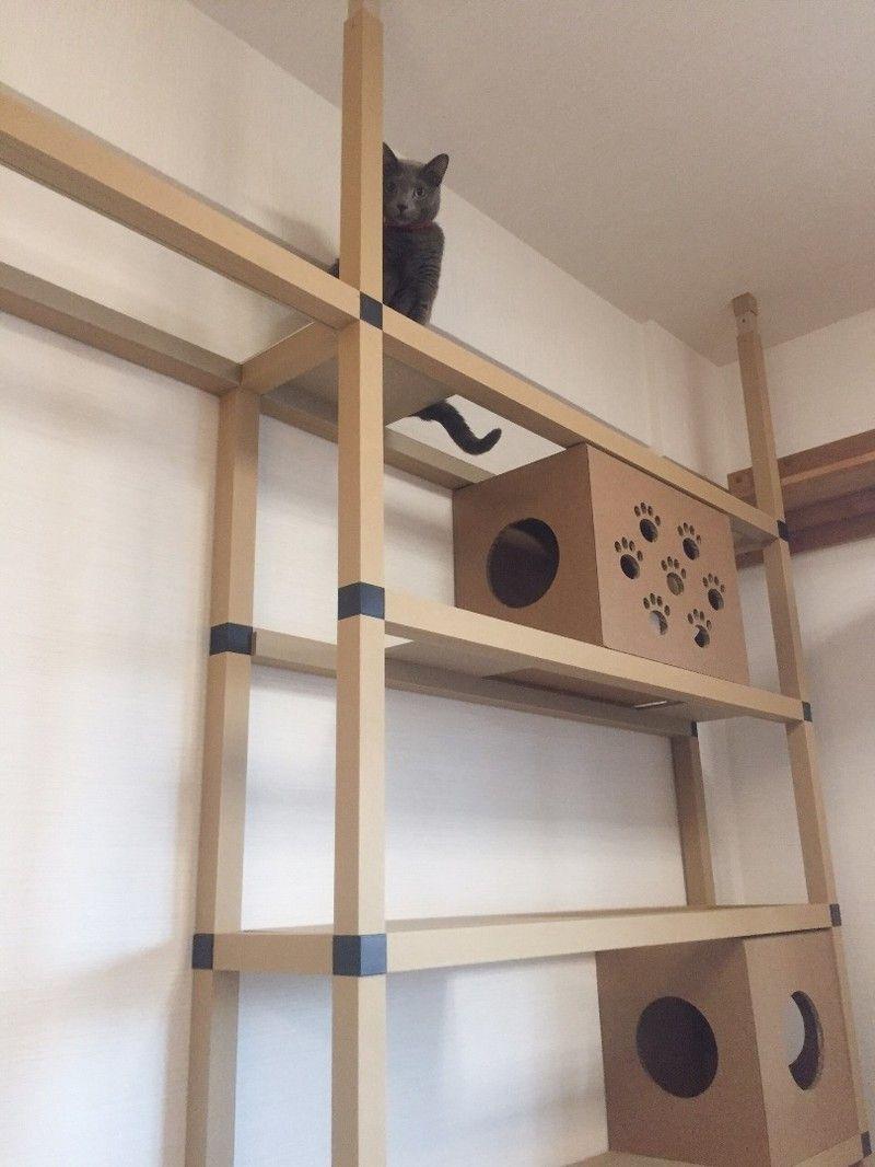 穴を開けずに設置 オシャレなキャットウォークの素材は一体 猫