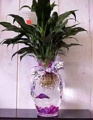 How To Create A Beautiful Betta Fish Vase Diy Decor Pinterest