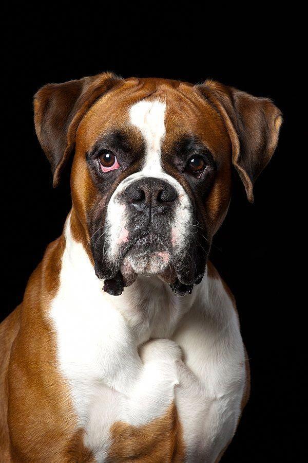 Dog Obedience Training Advice Dogtrainingtips 6954000683