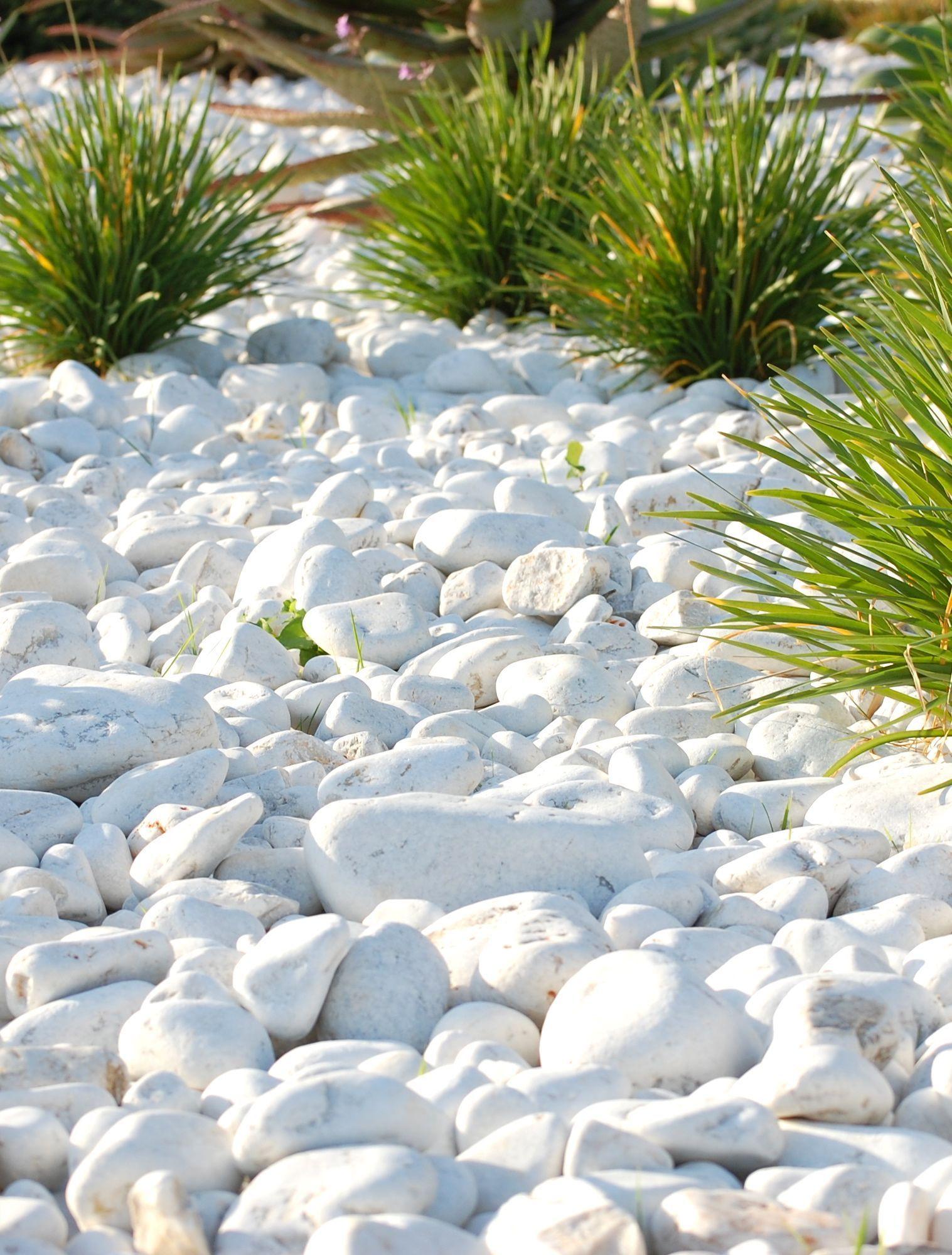 White Rocks Landscape Landscaping With Rocks Rock Plants Landscape