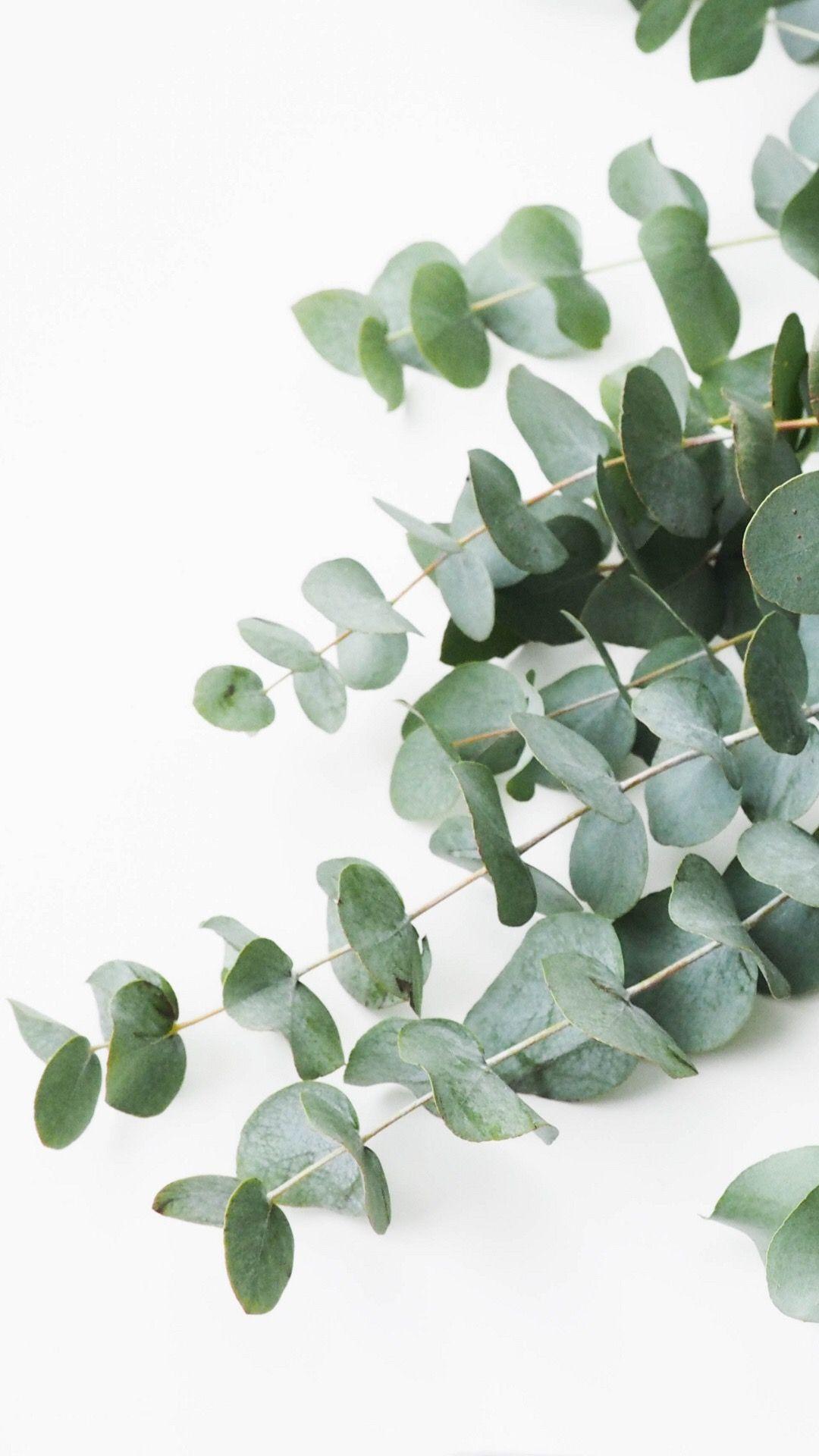 Pinterest: MaddyLanae ☼☾ | Plant wallpaper, Plant ...