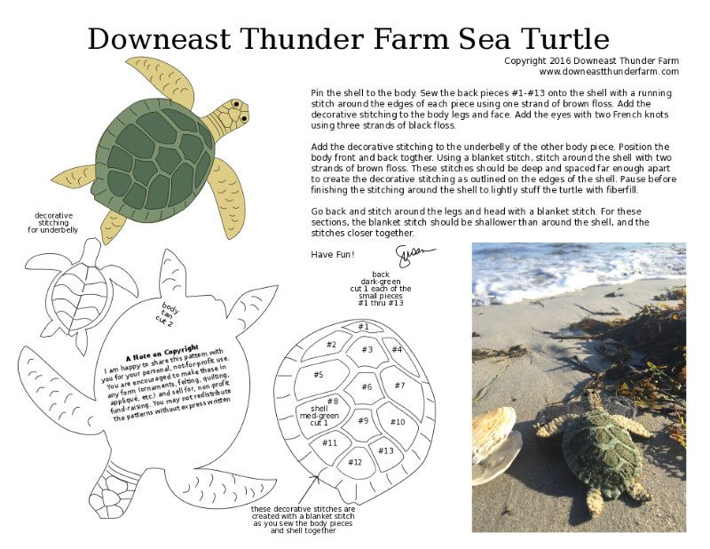 sea-turtle-1.jpg (800×618) | Miscellaneous | Pinterest | Proyectos ...