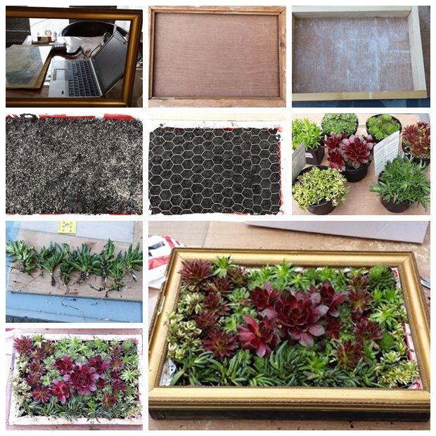 Awesome Wonderful DIY A Living Succulent Picture. Succulent Wall PlanterSucculent  ...