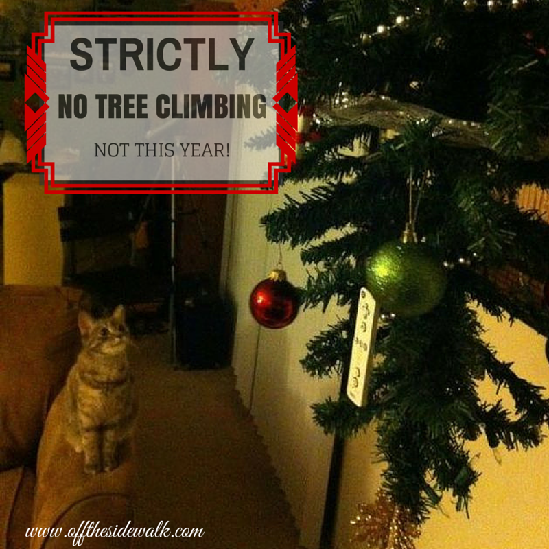 How to keep your kitty cat from climbing your Christmas