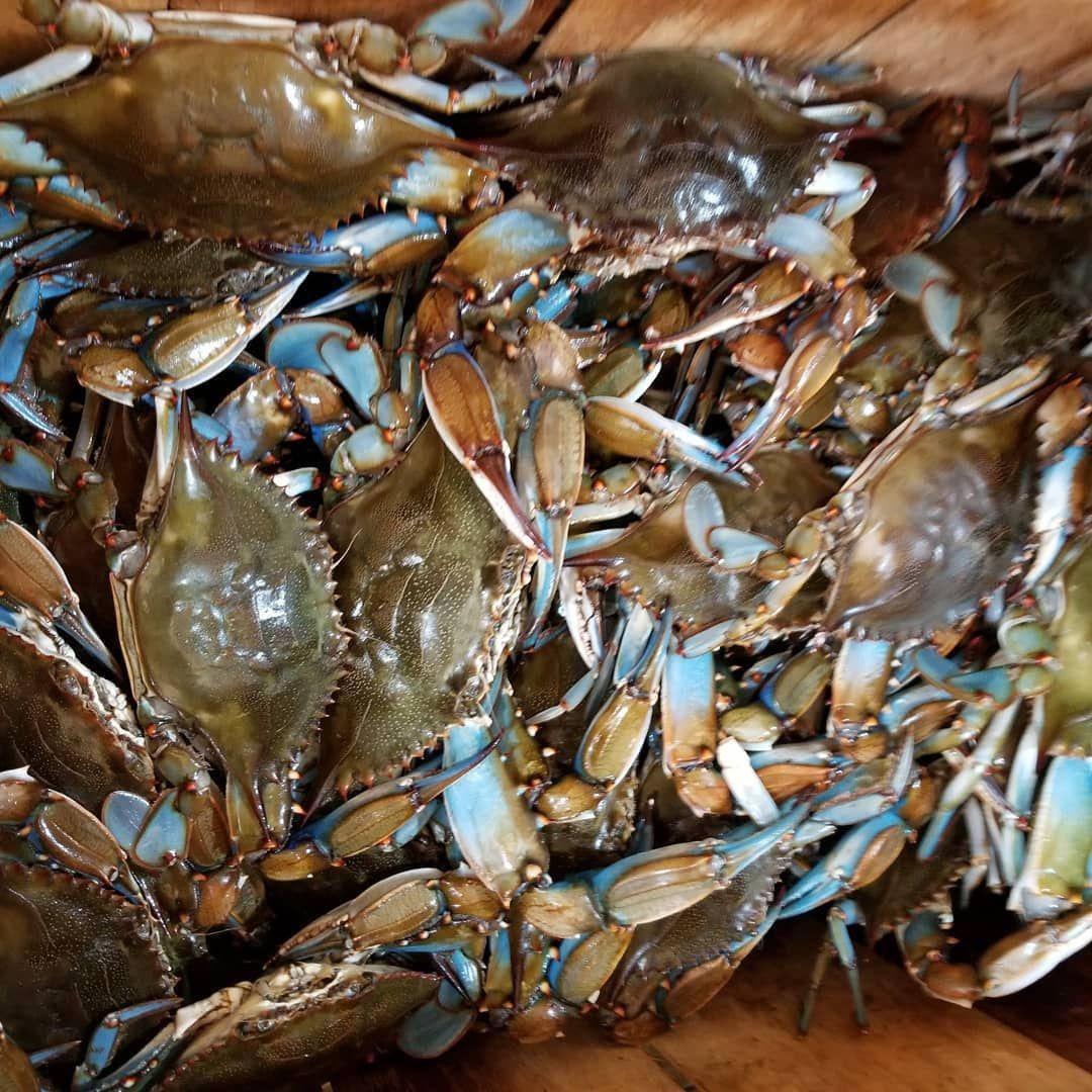 recipe: order live blue crabs online [7]