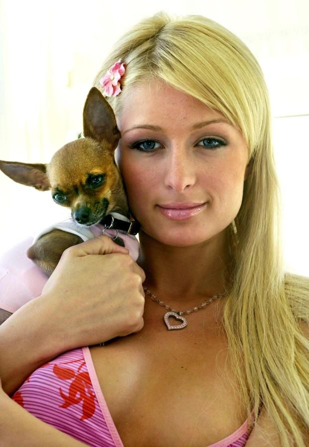 paris hilton tinkerbell crest. Google Search in 2020
