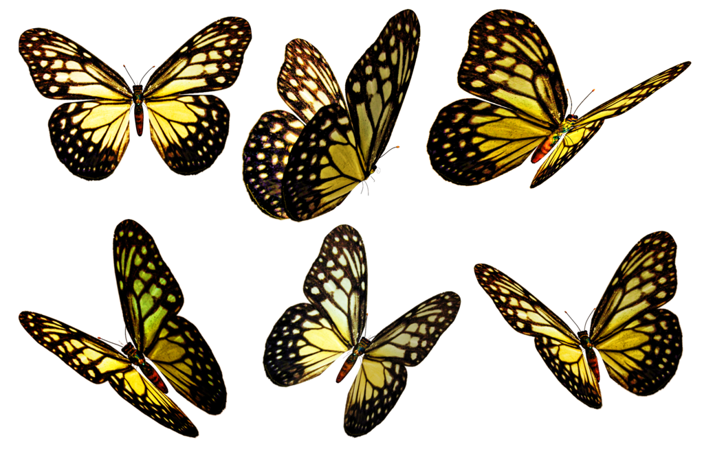 Butterflies 5 Png Stock Butterfly Pictures Yellow Butterfly Butterfly Art