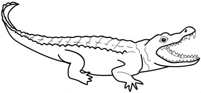 Games Alligator Coloring Pages Printable Coloringwallpaper Com Coloring Pages Dog Drawing For Kids Alligator
