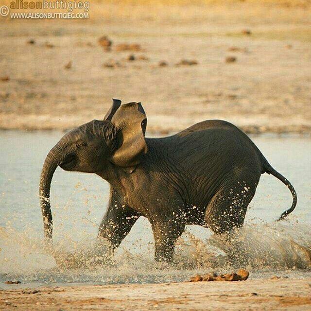 Follow @wildlifefriend for more amazing wildlife photos&videos @wildlifefriend  Cute baby  | Photo by @cheetah80  #Destination_wild