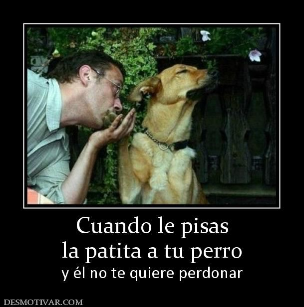 Cuando+le+pisas+la+patita+a+tu+perro+y+él+no+te+quiere+perdonar