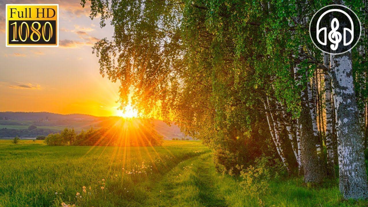 Утреннее пение лесных птиц для пробуждения. Звуки природы ...