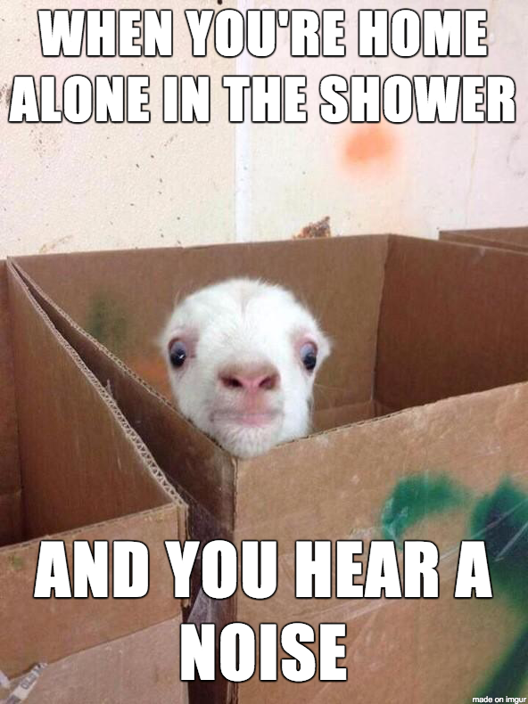 Cute Funny Baby Goat Meme When You Re Home Alone In The Shower