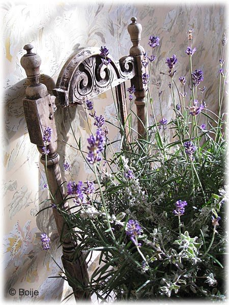flowers resting on a chair lavender love lavande. Black Bedroom Furniture Sets. Home Design Ideas