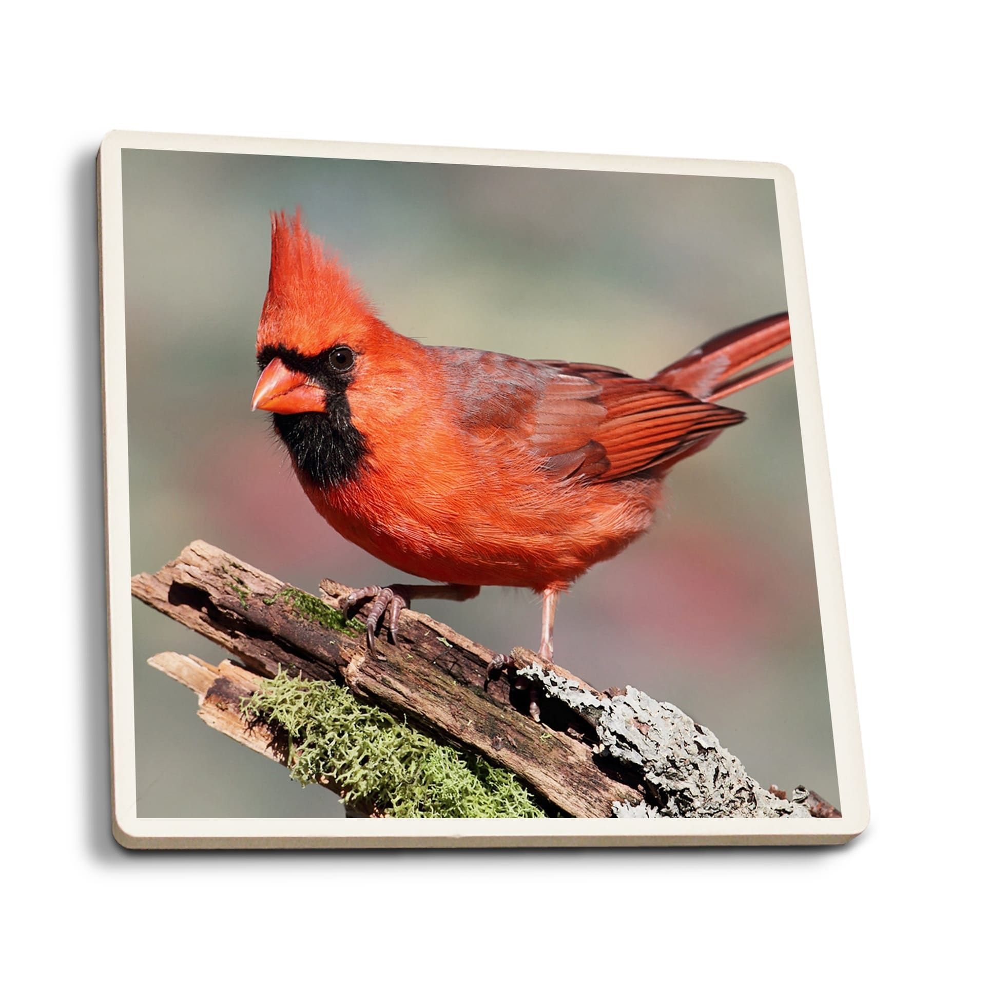 Cardinal Lantern Press Photography (Set of 4 Ceramic