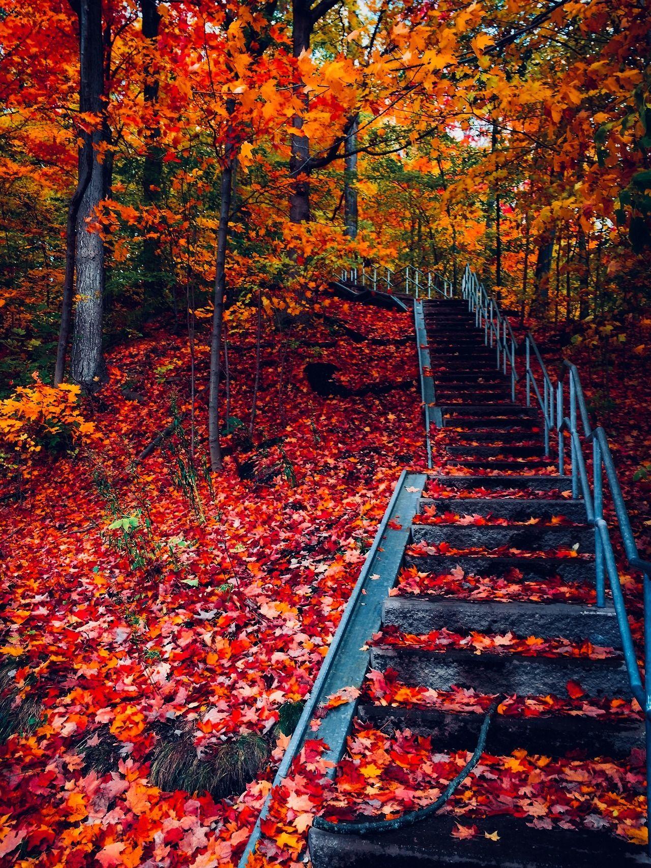 Erase Rewind Autumn Landscape Autumn Scenery Autumn Scenes