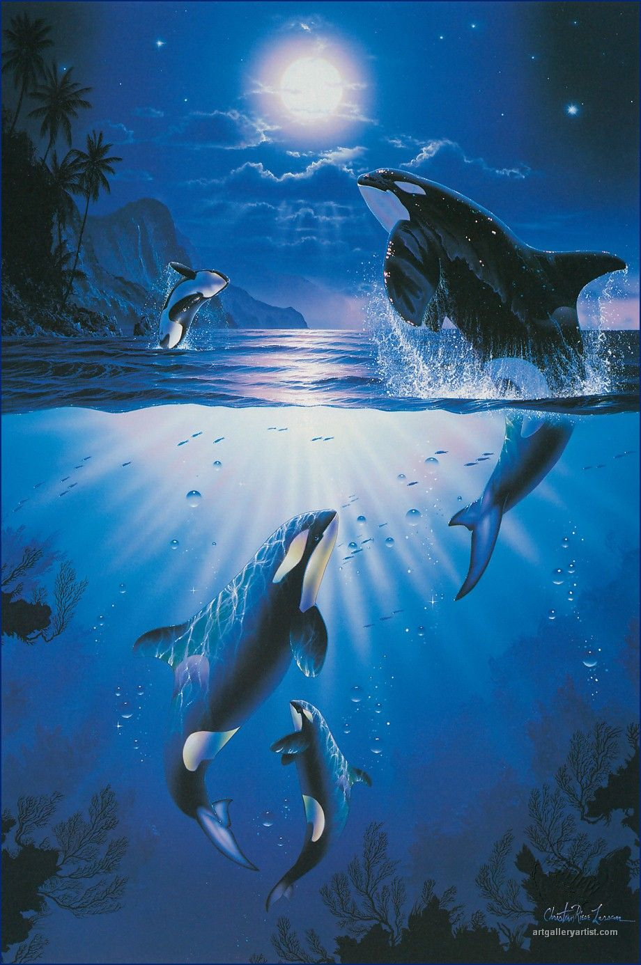 Christian Lassen Dolphin and Orca