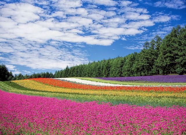 Kukka Puutarha, Sininen Taivas, Hokkaido, Japani