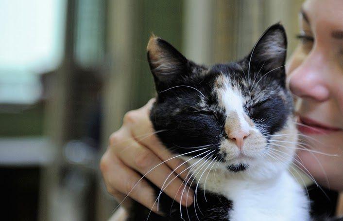 Mn S Feline Rescue S Fabulous Feral Cat House Challenge Feral Cat House Feral Cats Cats