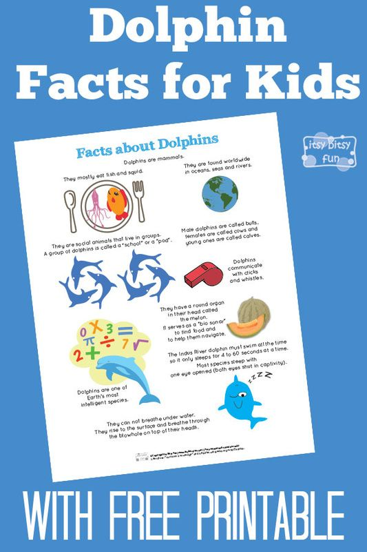 Dolphin Facts for Kids Dolphin facts, Free printables and - free fact sheet