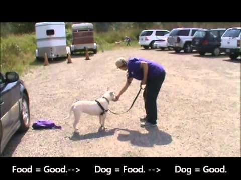 Youtube Dog Training Reactive Dog Dogs Dog Training