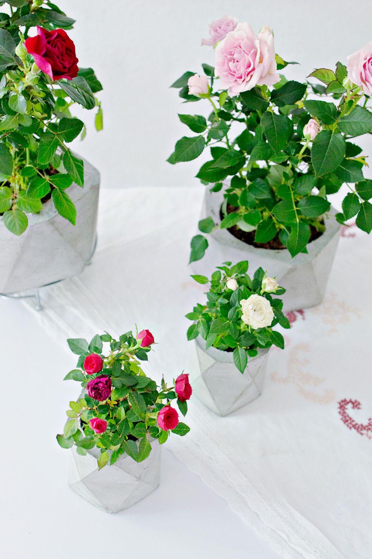 Diy diy concrete planters concrete diy flower pots