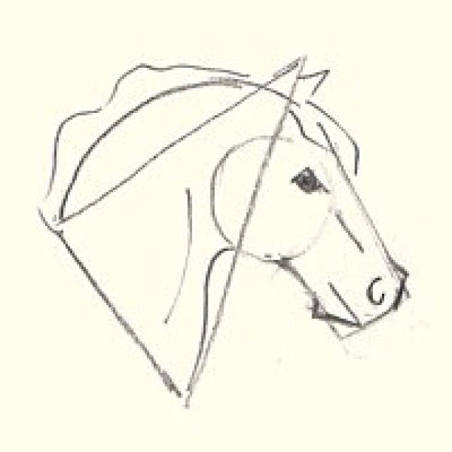 How to draw a horses head for beginners adding detail to the horses head