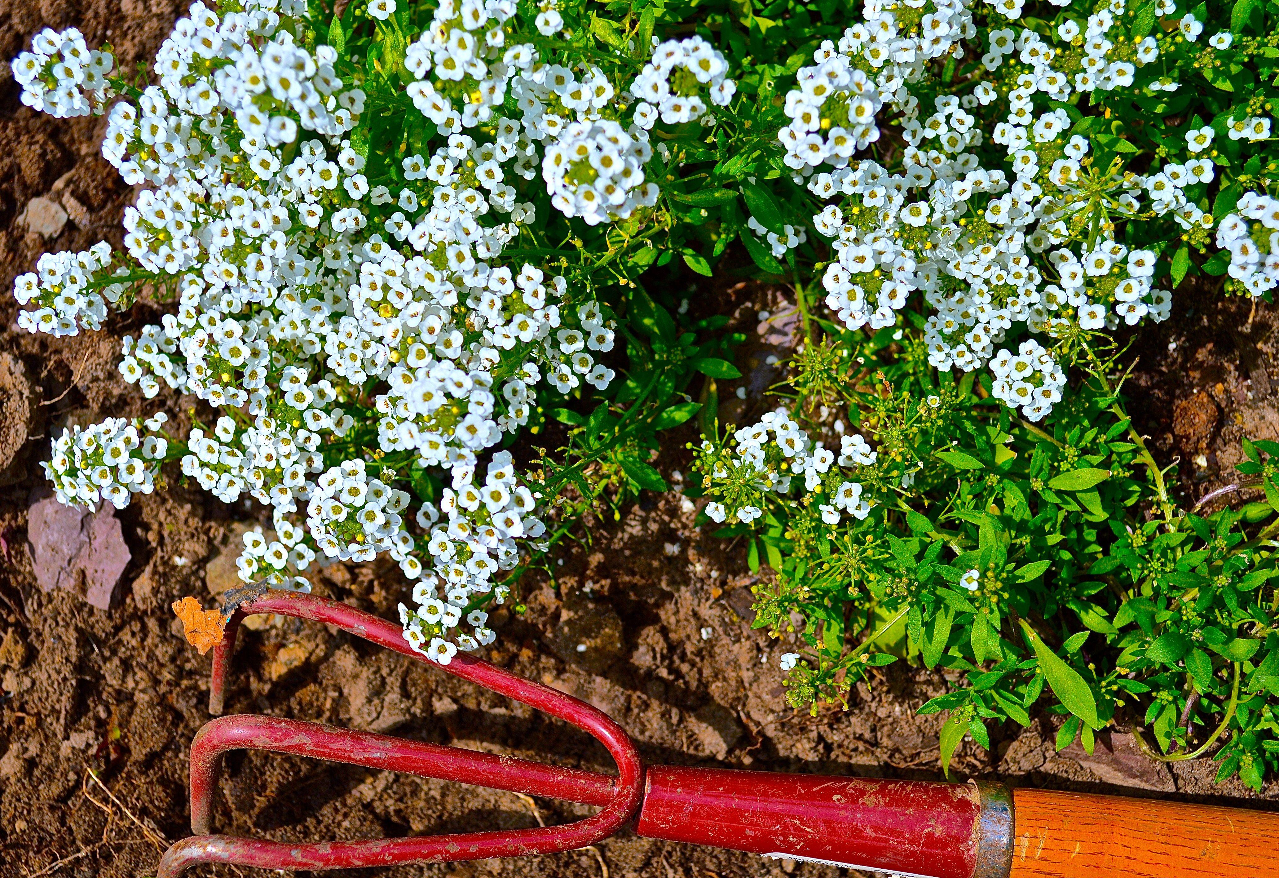Jardiner en juin Parties de campagne