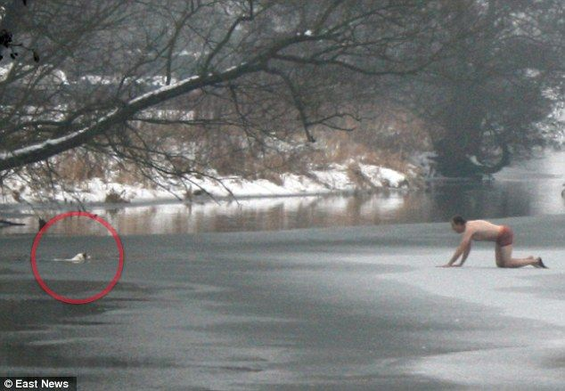 Stripped down to his underwear in the bitter cold, this man risks his life trying to rescue his dog from a frozen river.   Moments later, as he inched along the ice on his hands and knees, he fell into the water – yet fortunately, both dog and owner clambered out unscathed and continued their walk. WOW! WHO WOULD NOT DO THE SAME?!