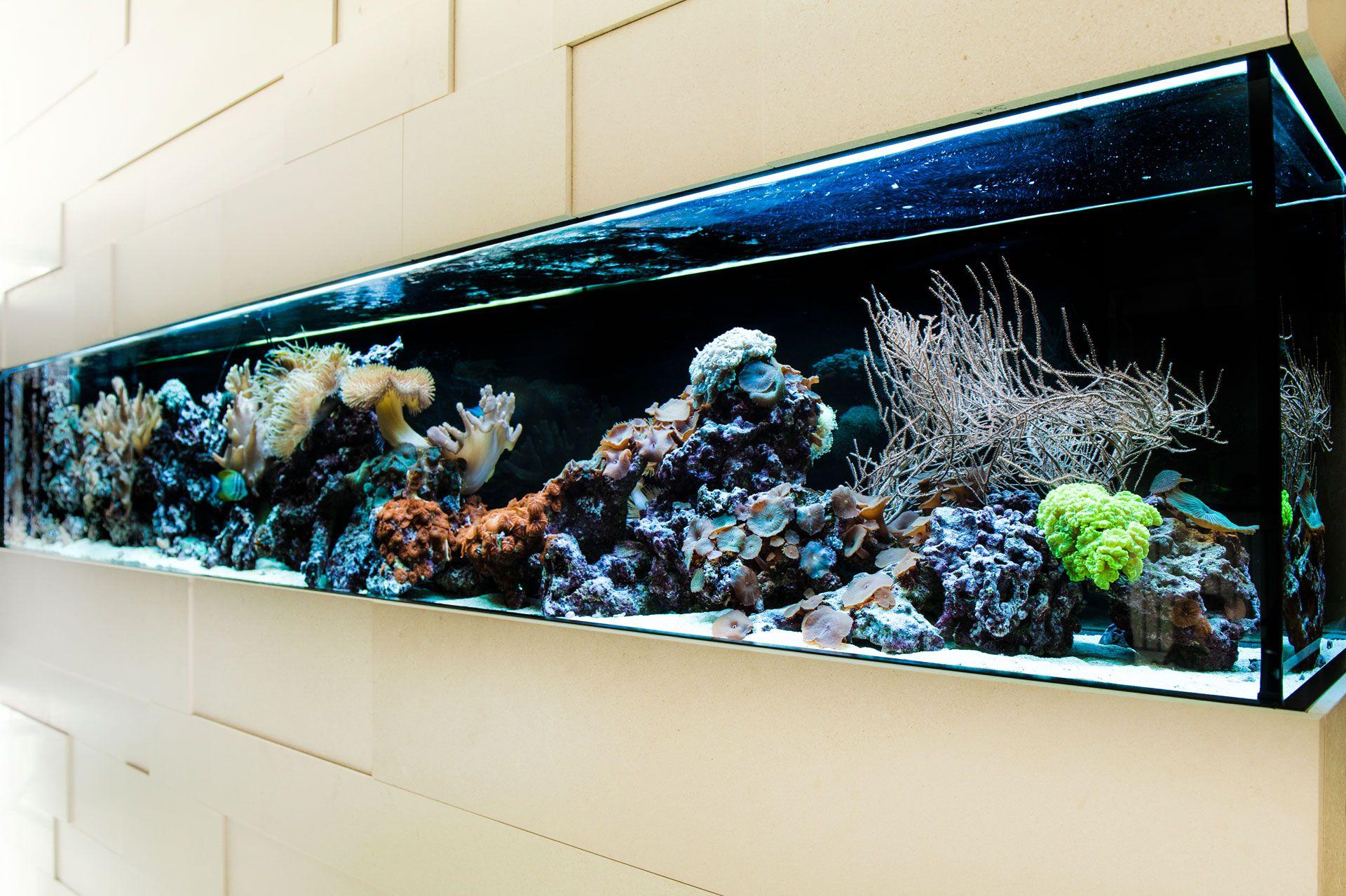 raumteiler aquarium pinterest raumteiler ausstellungsraum und aquarium. Black Bedroom Furniture Sets. Home Design Ideas