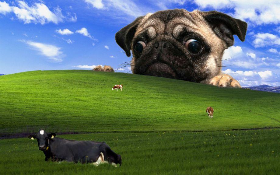 Spice Up Your Life With A Brand Spankin New Desktop Wallpaper 10 Photos Cool Desktop Wallpapers Field Wallpaper Pug Wallpaper