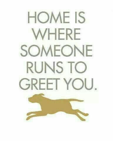 ♡☆ Home is where someone runs to Greet You! ☆♡