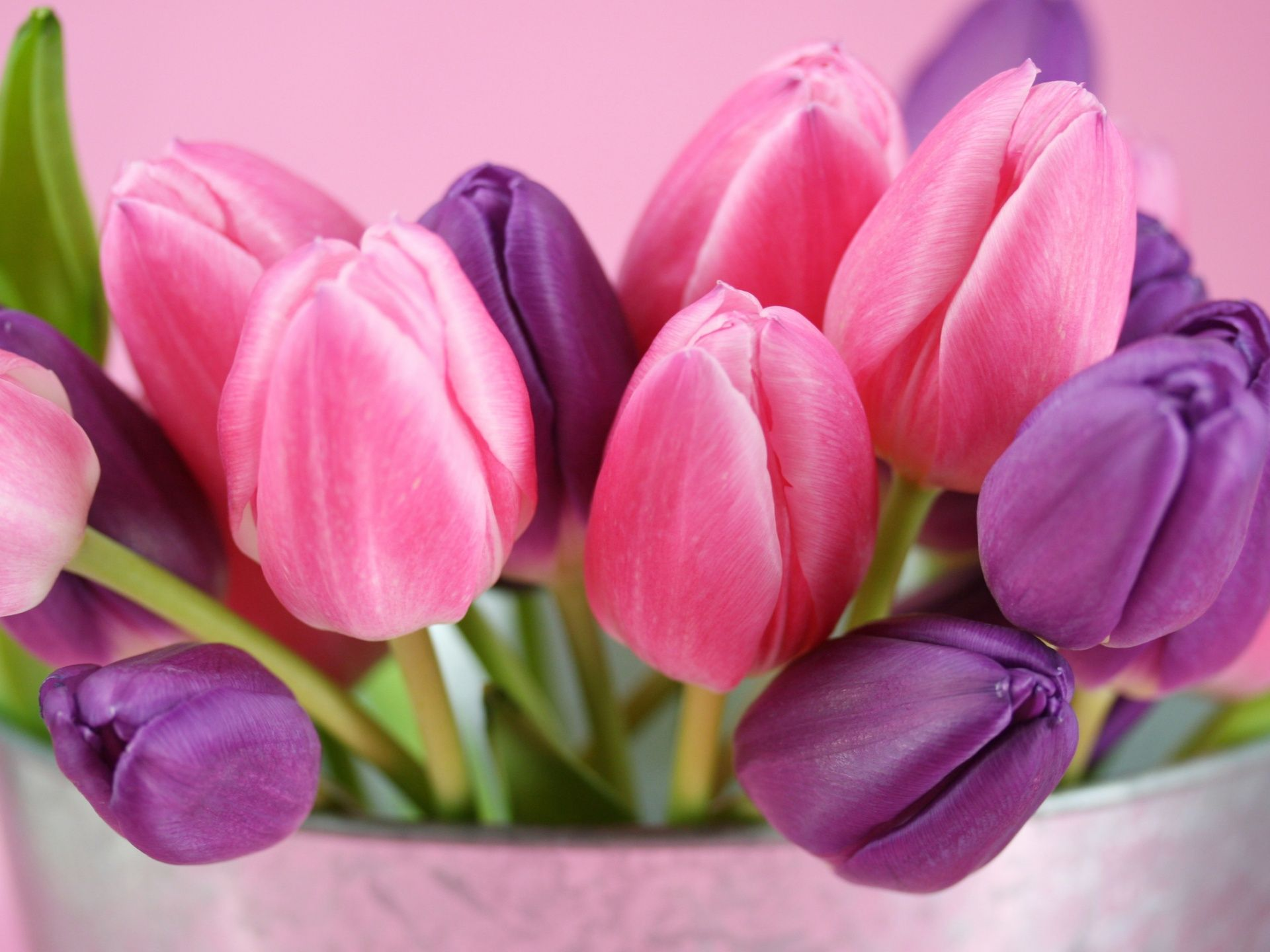 Dark Purple And Pink Tulips Flower Arrangements Hd Picture Pink