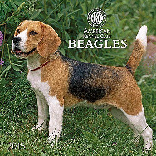 The American Kennel Club Presents Beagles 2015 Wall Calendar