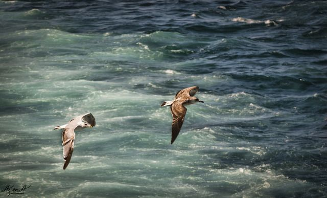 Animals in Istanbul, Turkey (flight) - a photo by Shahin Azma