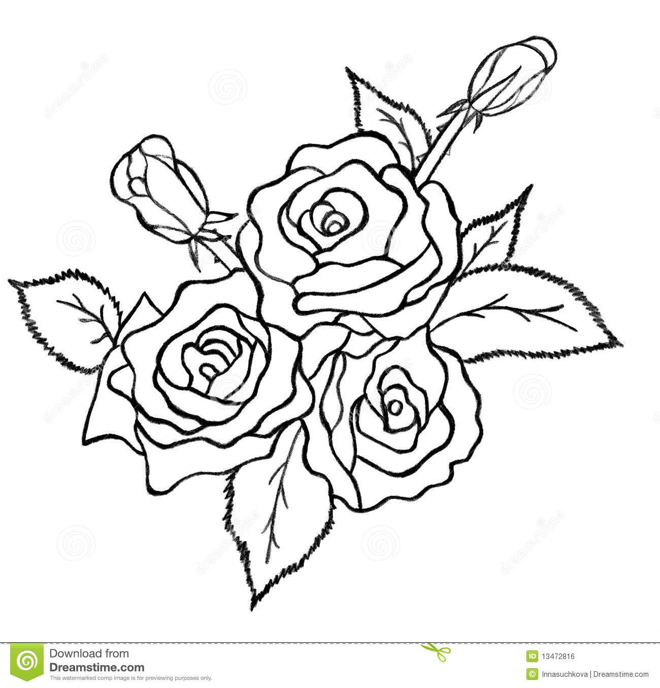 Bunch of roses sketch on white background, pencil drawing