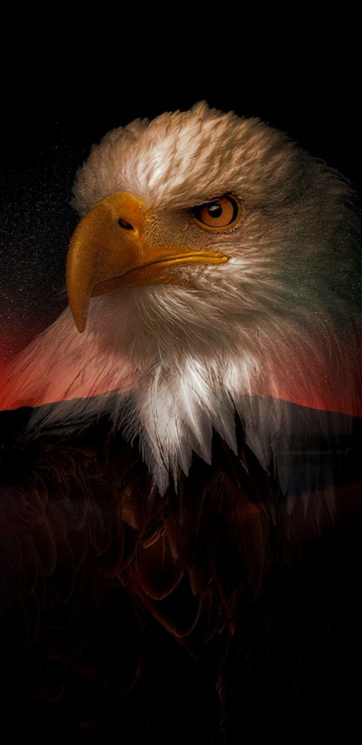 4k Ultra Hd Eagle Wallpapers Black Wallpaper For Android And Iphone Eagle Wallpaper Bald Eagle Android Wallpaper Black