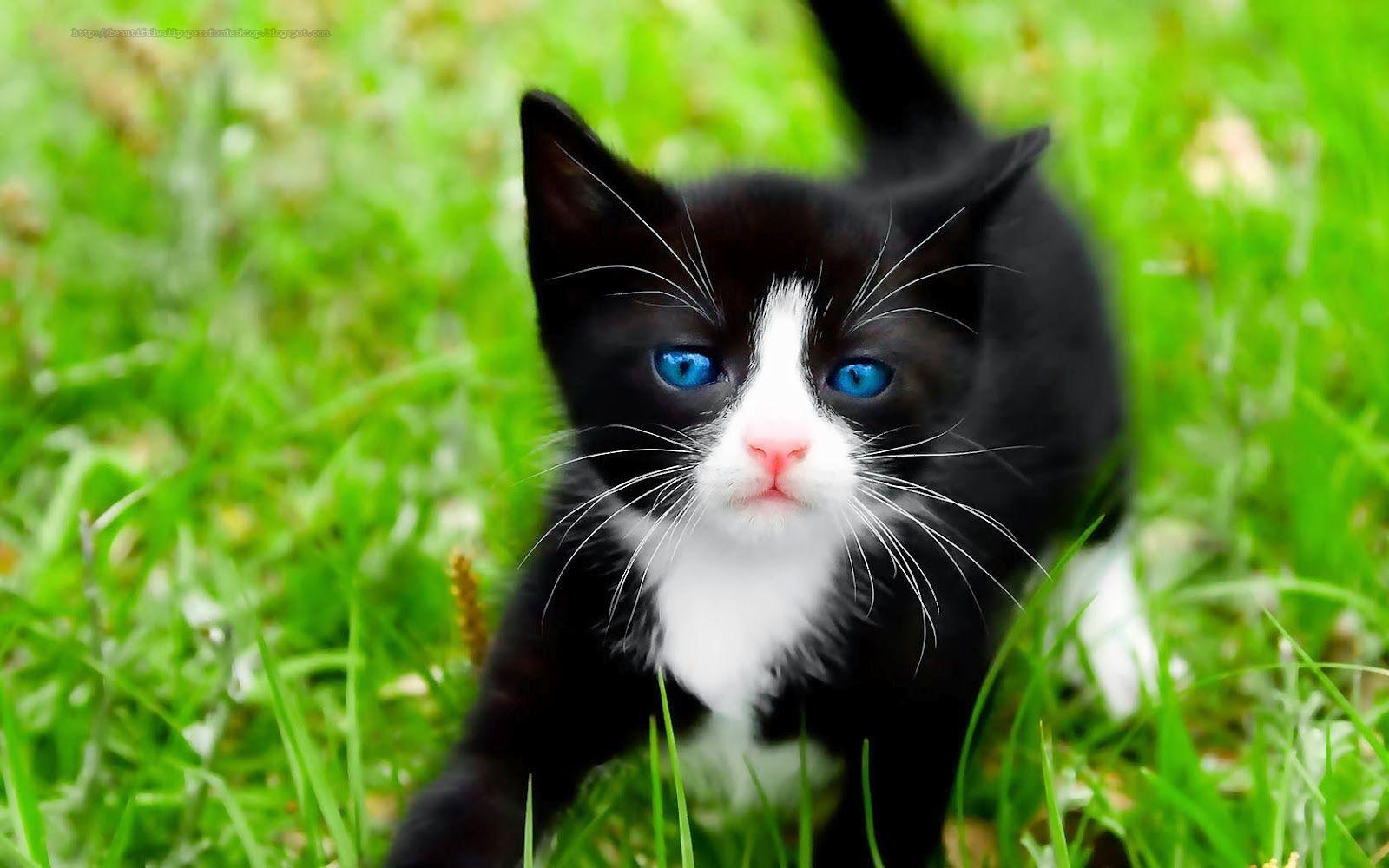 Cute Cat Wallpaper Hd 1600 1000 Cute Cat Backgrounds 46
