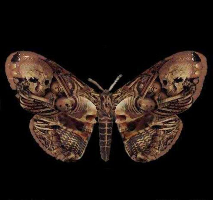 Skull Moth Tot Kopf Skelett
