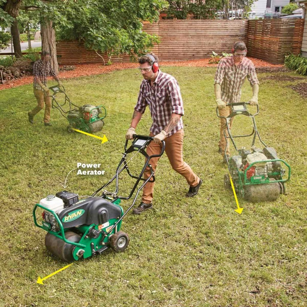 How to restore a weedy patchy lawn in 2020 lawn care