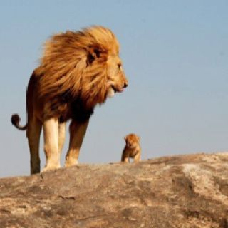Pride Rock...Mufasa Talking To Simba.