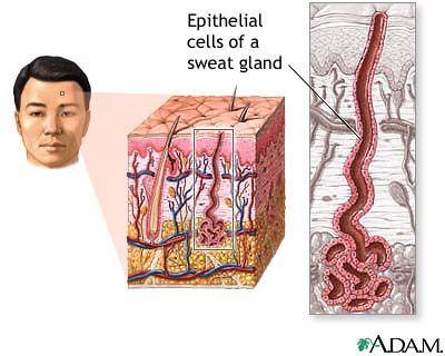 Skin (Integumentary) System Information   Integumentary System ...
