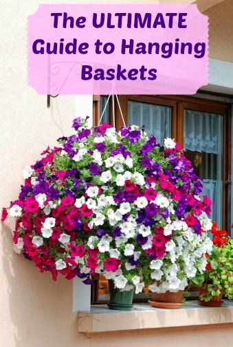 The Ultimate Guide To Hanging Baskets Hanging Flowers Hanging Flower Baskets Petunia Flower