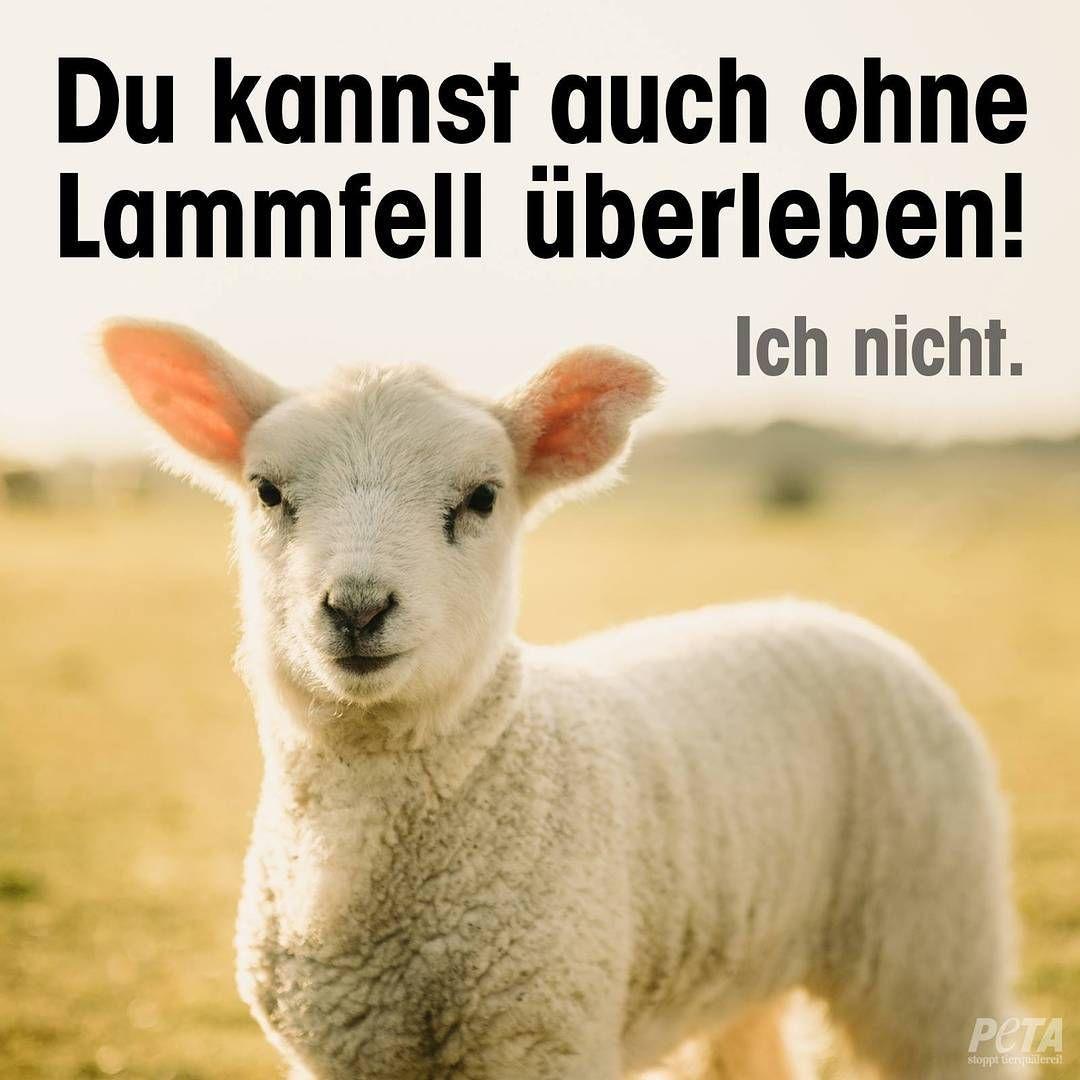 """PETA Deutschland on Instagram: """"#Lammfell ist nichts anderes als die Haut eines GETÖTETEN Babys. Die Wolle wird mitsamt der Haut abgezogen."""