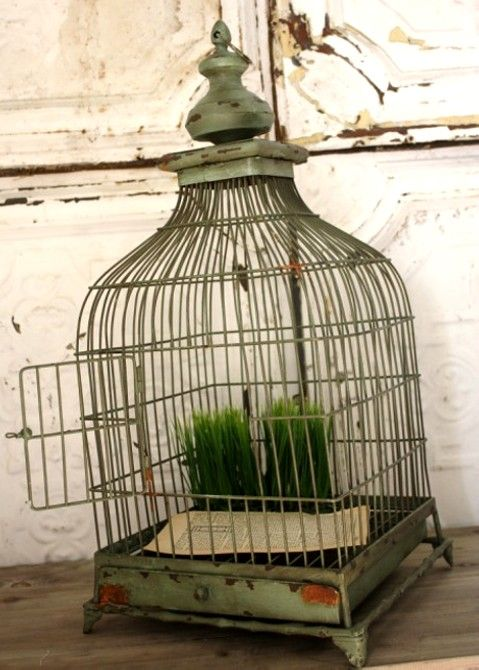 Antique Bird Cage (great for decorating) Caged Pinterest