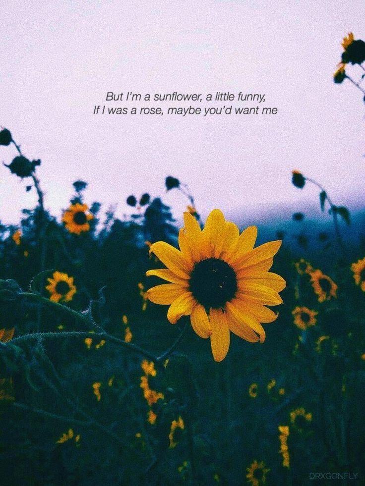 Poetry Sunflower Rose Flower Love Heartbreak Rejection