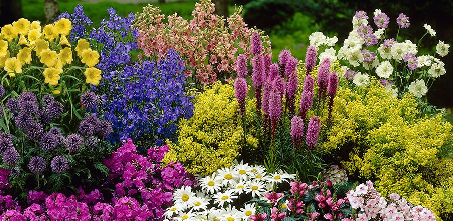Staudenbeete planen und anlegen staudenbeet for Blumenbeete anlegen beispiele