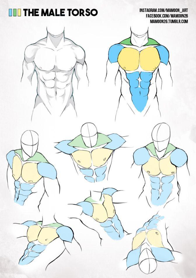 TORSO - Hombre   Referencias   Pinterest   Anatomía, Dibujo y Estilo ...