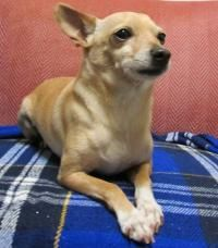 Alameda S Adoptable Pets Maddie Days Free Adoptions Next Weekend Pets Adoption Alameda